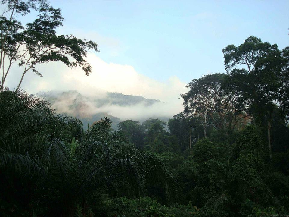Afi Mountain, Nigeria (photo © Pandrillus)